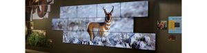 video_wall-national_geographic_museum